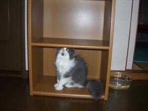 Bookstandlady