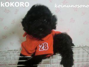 Kokoro_rego